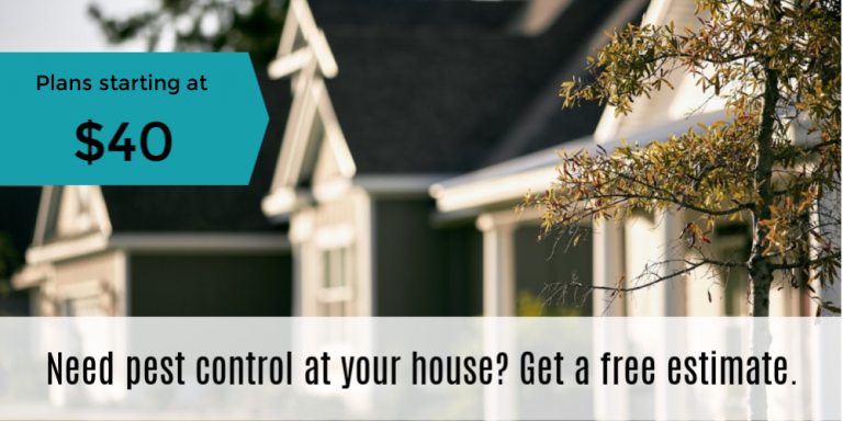 Affordable pest control in Anderson, Ca, Cottonwood, Ca, Redding, Ca, Shasta County, Ca.